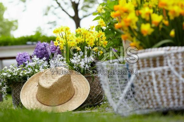 Spring flowers on pot