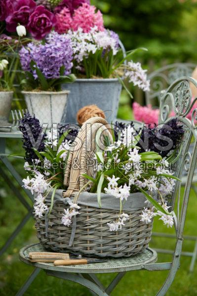 Voorjaarsbloemen in mand