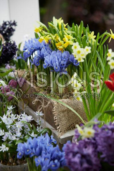 Voorjaarsbloemen op pot
