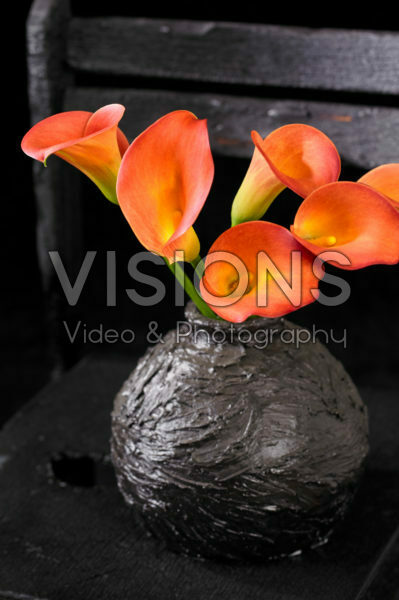 Zantedeschia in vase