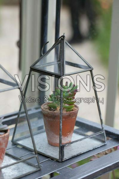 Succulent in glasshouse