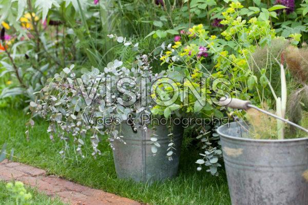 Flowers in buckets