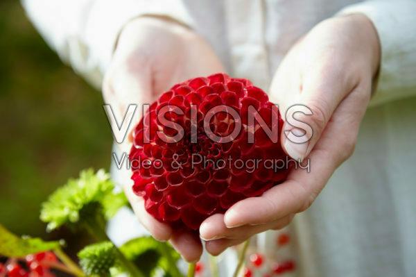 Dahlia red