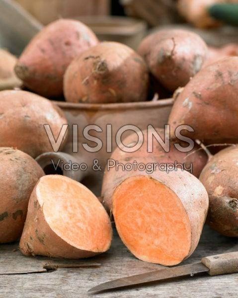 Ipomoea batatas Covington