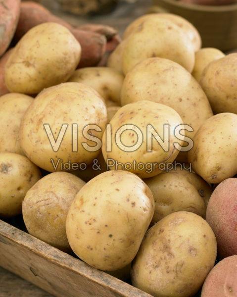 Solanum tuberosum Melody