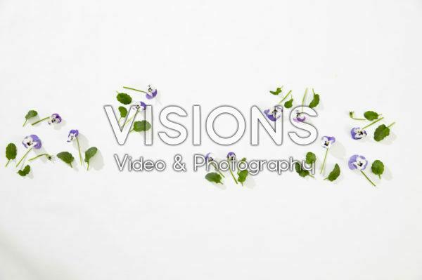 Viola collage