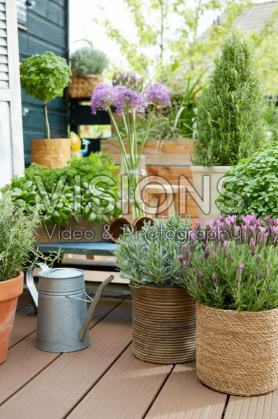 Herbs on pot on rooftop garden