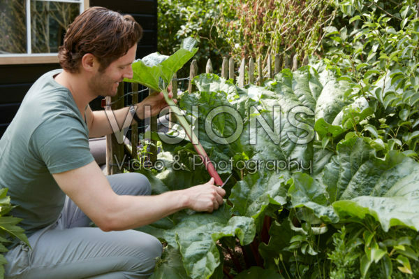 Man cutting rhubarb
