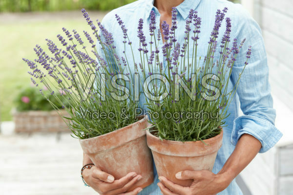 Lady holding lavender