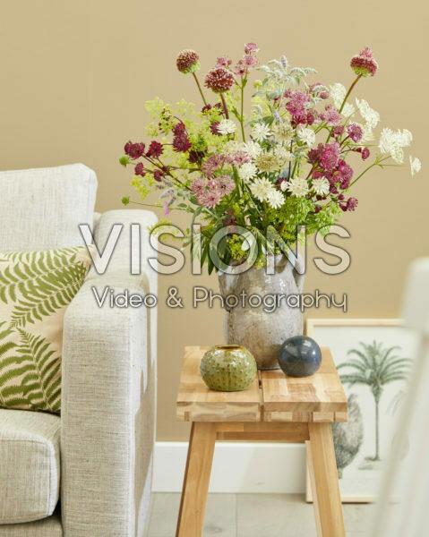 Astrantia Sparkling Stars in vase