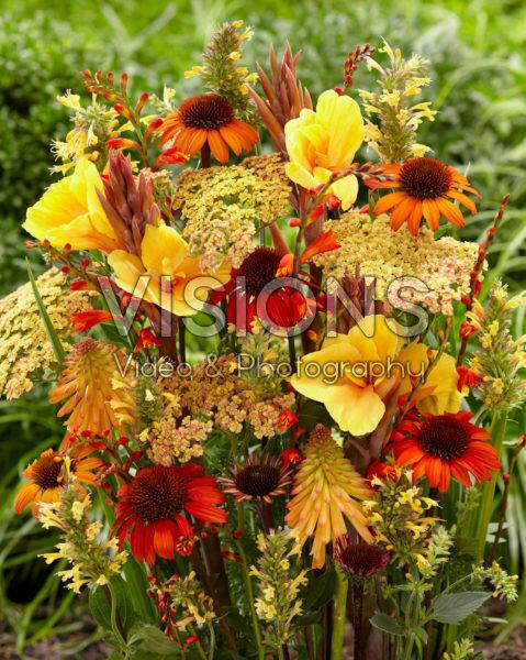 Perennial flower mix