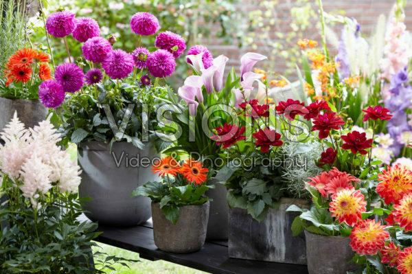 Summer flower collection