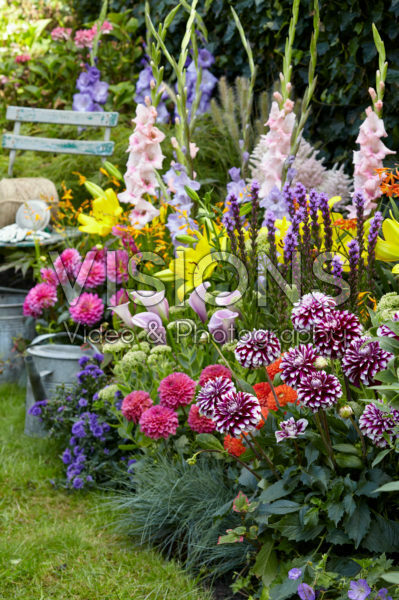 Summer flowering bulbs in border