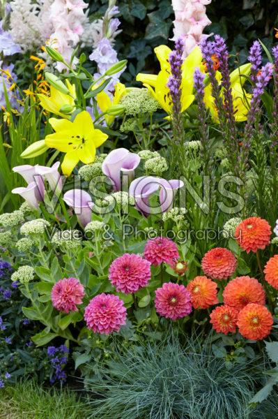 Summer flowering bulbs in border