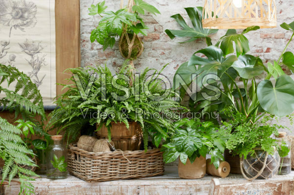 House plant collection