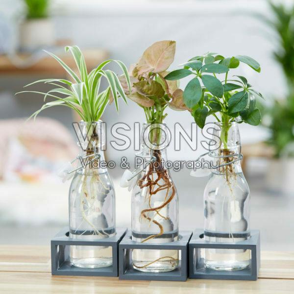 Kamerplanten combinatie