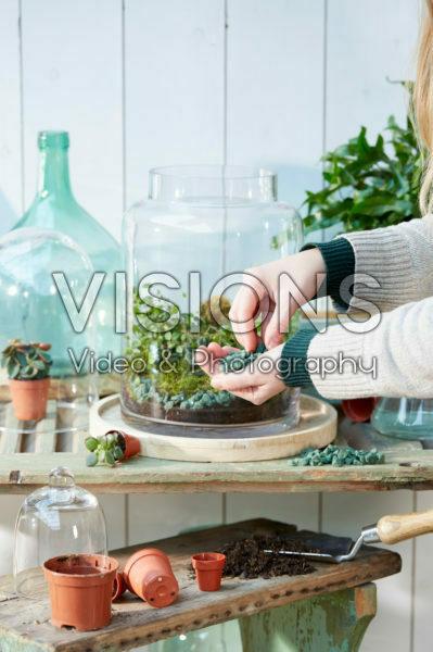 Kamerplanten terrarium