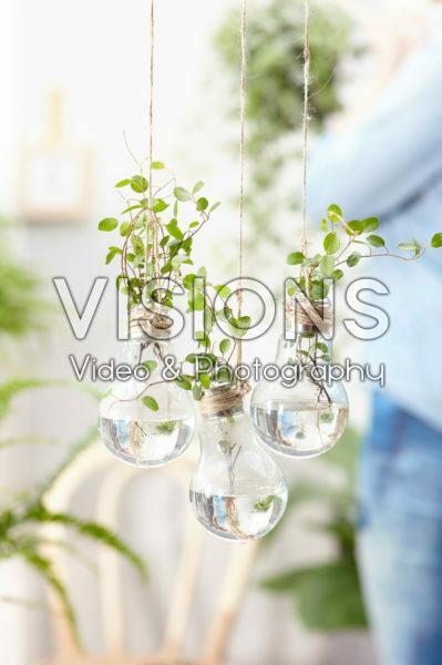 House plants in light bulb