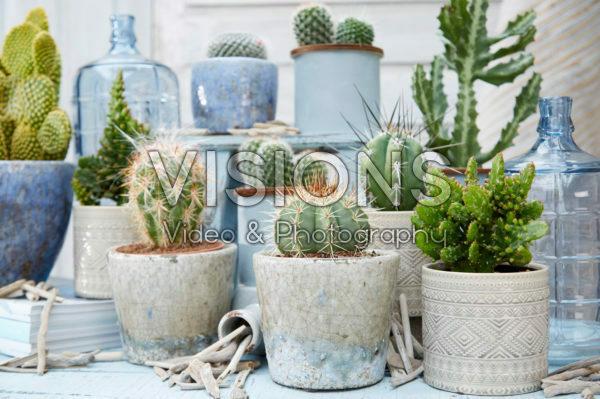 Cactus collectie