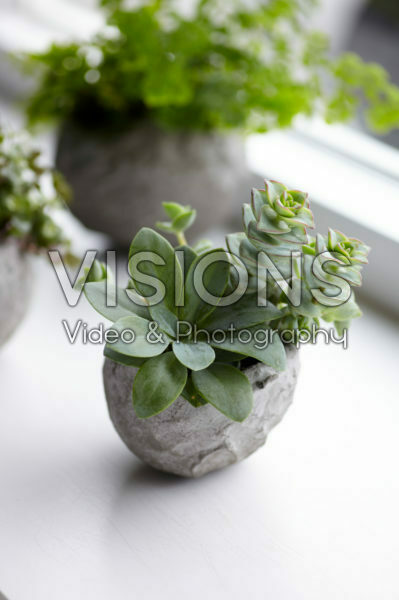 Vetplantjes in zelfgemaakte bloempot
