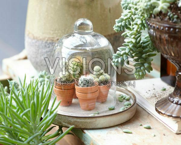 Cactus combination