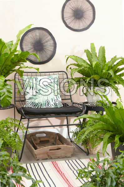 Fern collection