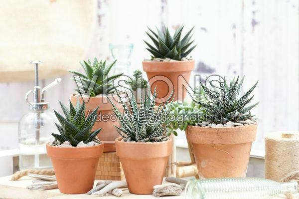 Aloe collectie