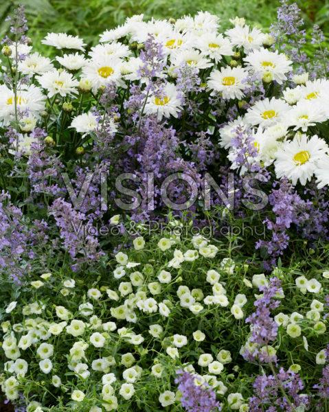 Perennial combination