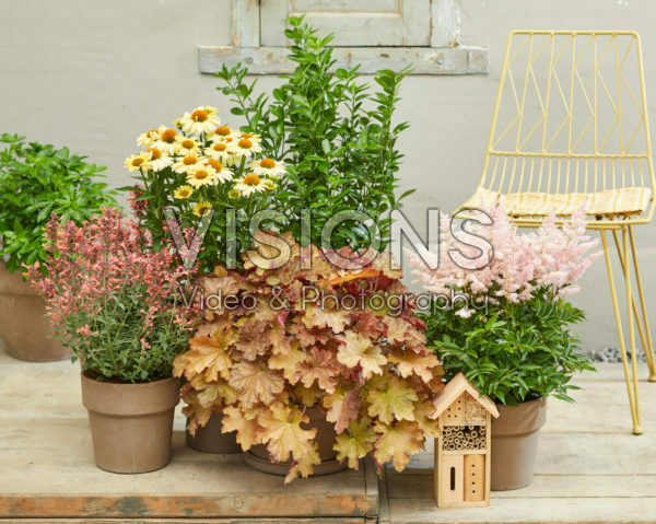 Perennials on patio