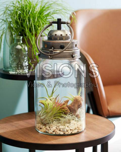 Decorative lantern with Tillandsia
