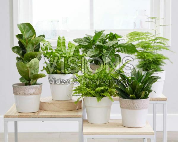 Luchtzuiverende kamerplanten collectie