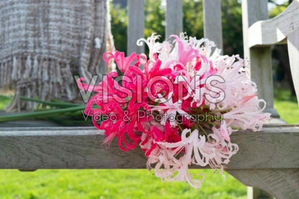 Nerine flowers