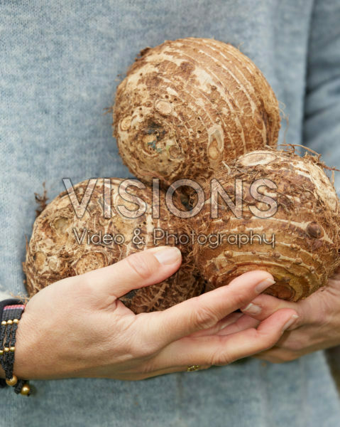 Alocasia bulbs