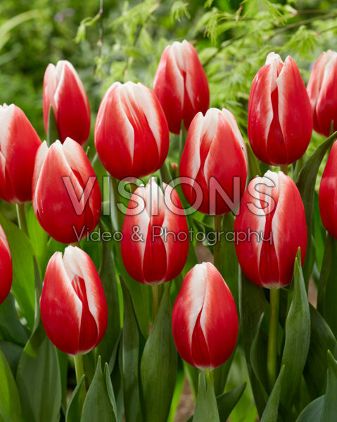 Tulipa Energy4all