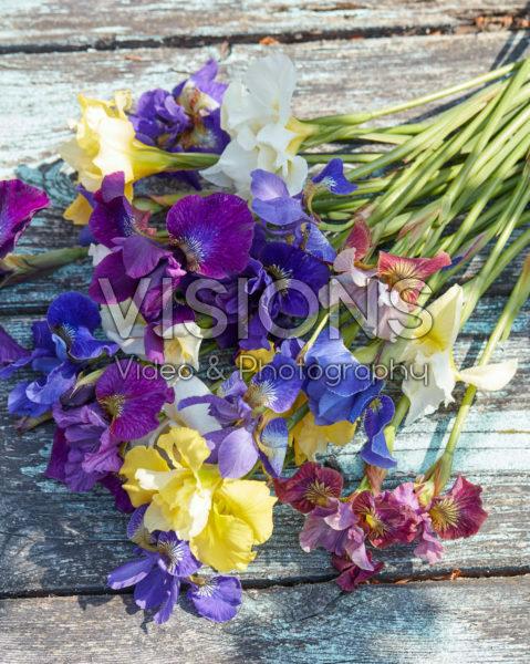 Iris sibirica mix