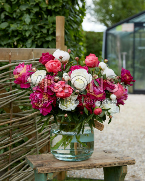 Paeonia pink and white bouquet