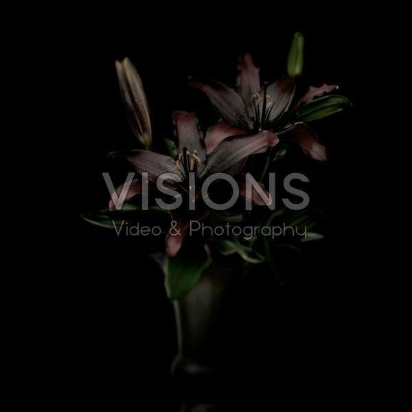 Lilium in zwart