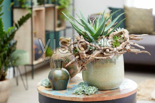 Aloe arrangement