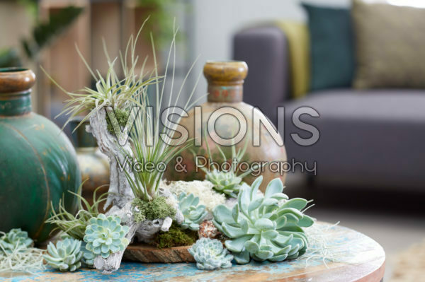 Air plant collectie