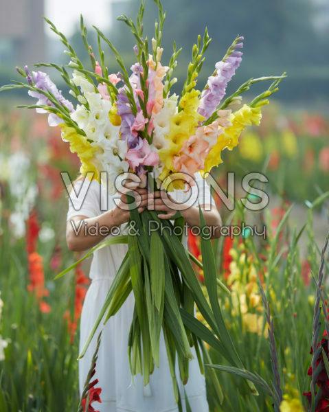 Gladiolus Pastel mix 2