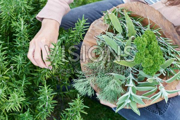 Kruiden oogsten