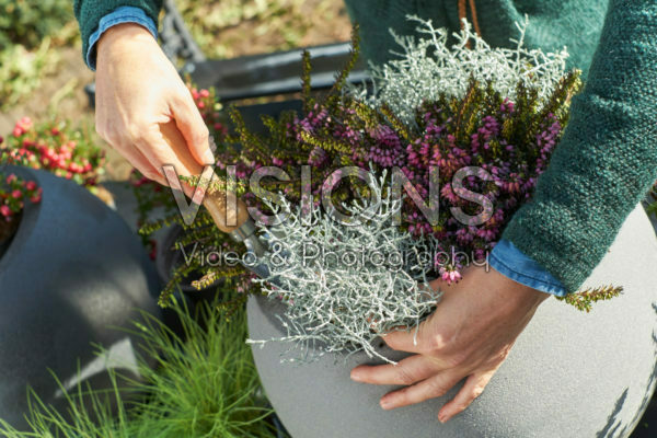 Making mixed autumn container