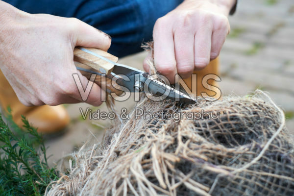 Cutting hessian from root ball