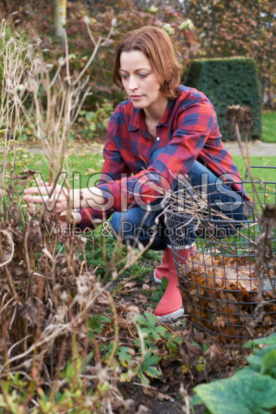 Pruning deciduous shrubs