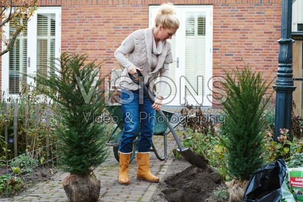 Lady planting Taxus