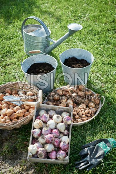 Planting spring-flowering bulbs
