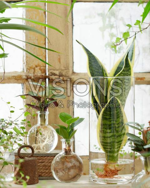 Planten in glazen vazen