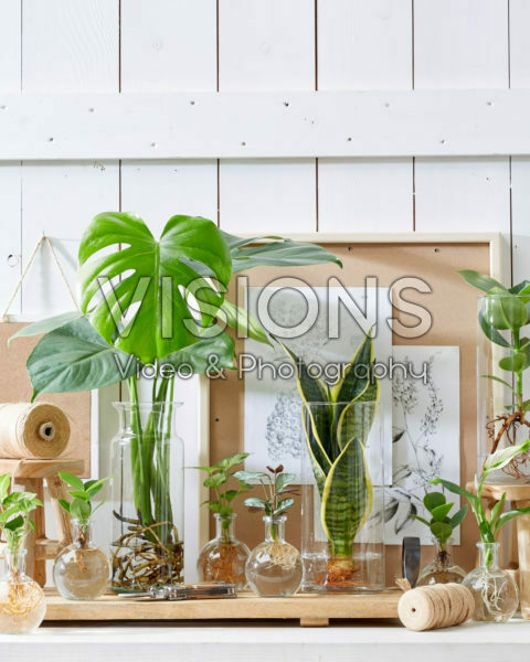 Plants in glass vases