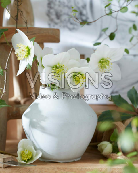 Helleborus flowers in vase