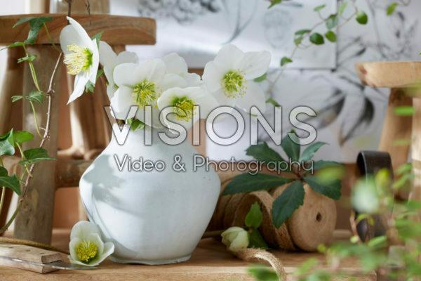 Helleborus bloemen in vaas